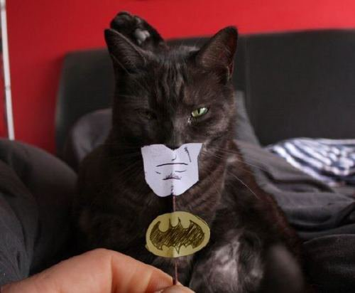 Funny Picture - Batman Cat