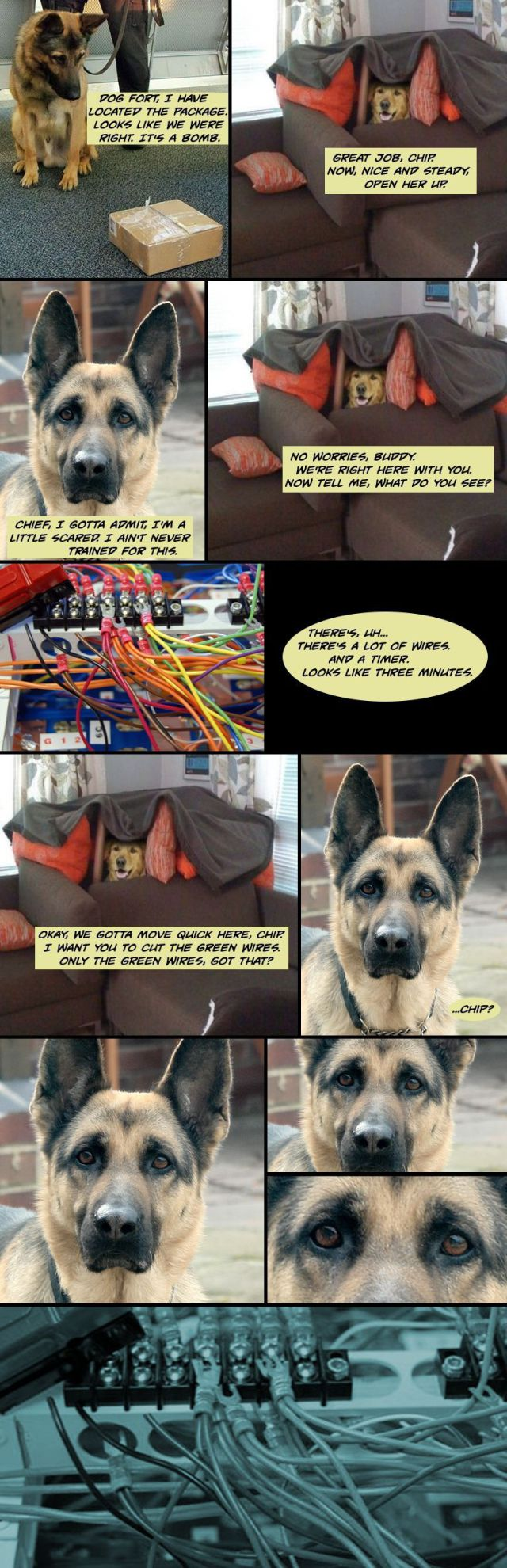 Dog Fort Comics - Package located